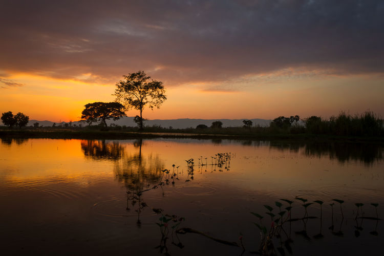 tree in field sunset backgroundform Thailand Sky Sunset Water Beauty In Nature Scenics - Nature Tranquility Cloud - Sky Tranquil Scene Reflection Orange Color Tree Lake Plant Idyllic Waterfront Nature No People Non-urban Scene Silhouette Outdoors Reflection Lake