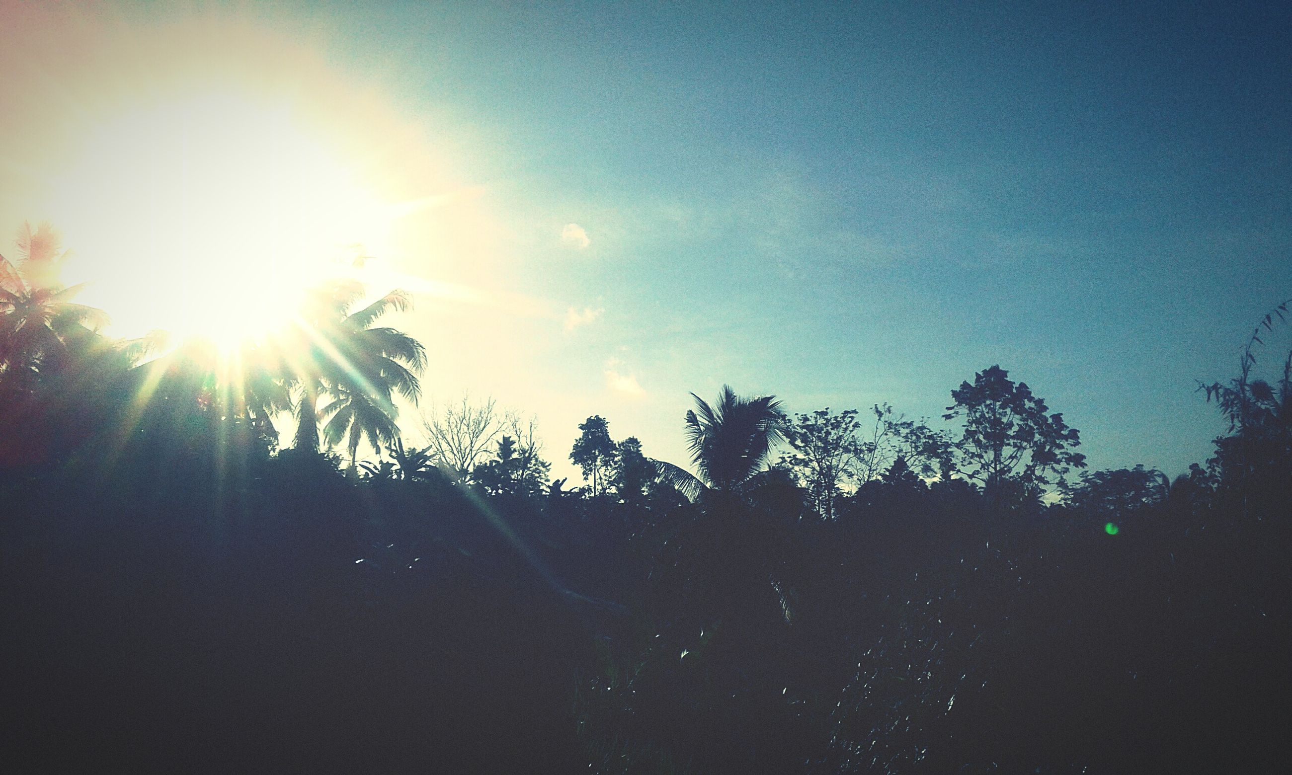 sun, lens flare, sunlight, sky, sunbeam, nature, tree, low angle view, tranquility, no people, scenics, silhouette, outdoors, beauty in nature, day