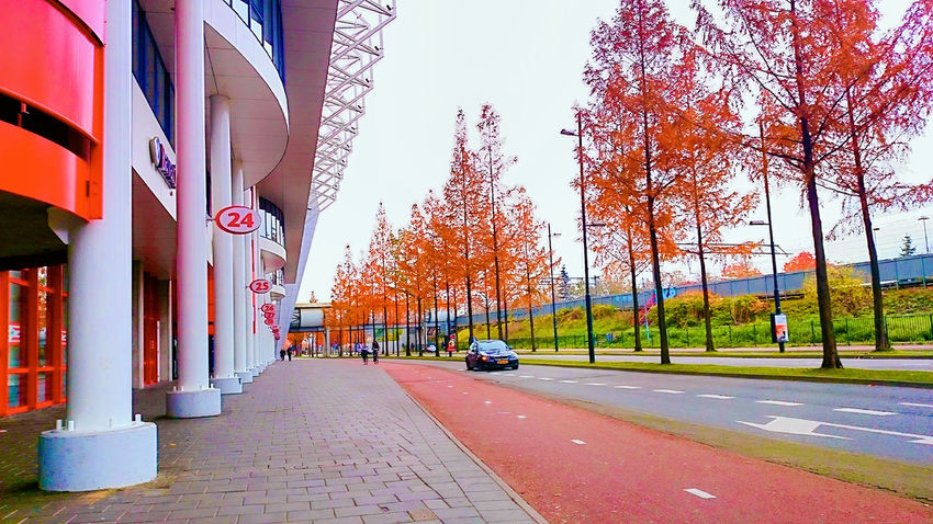 Building Exterior City Outdoors Cityscape Architecture Road Leaves 🍁 Autumn Autumn Leaves The Week Of Eyeem EyeEm The Best Shots Nature Our Best Pics Relaxing Fine Art Atmosphere Of Peace Taking Photos Beauty In Nature Tree Tree Trunk Caught In The Moment Built Structure Caught The Moment Streetphotography Streetphoto_color