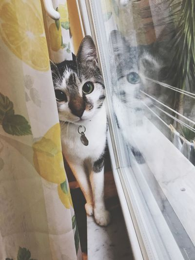 Aspettando il ritorno. Pets Animal Window Feline Animal Themes One Animal