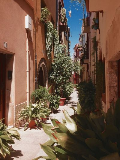 Spain🇪🇸 Cambrils Architecture Outdoors Plant Day Flower No People Building Exterior City