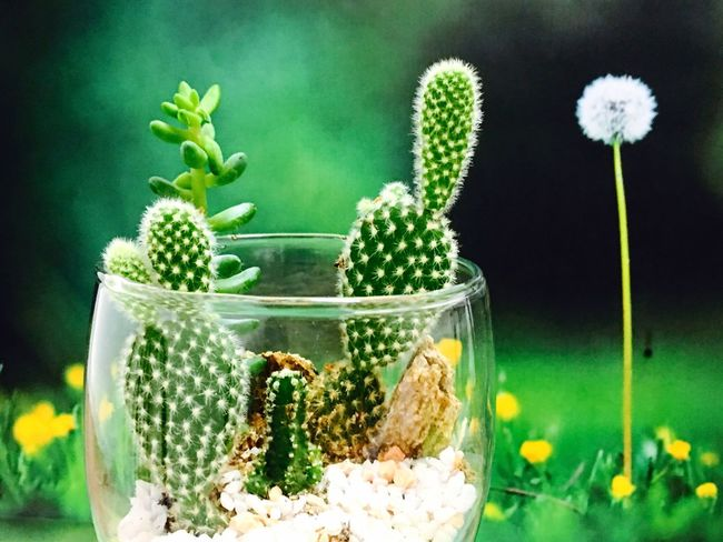 Terrarium🍀 Cactus Terrarium Nature Close-up Green Color Plant Leaf Green Tree Freshness Flower Serving Size New Life Tiny Tree