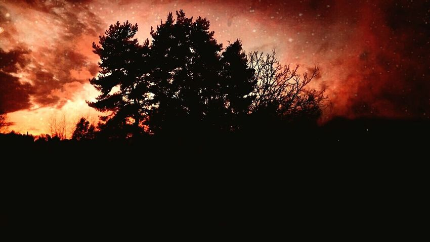 Nature Beauty In Nature Sky No People Night Tree Sunset Silhouette Outdoors Branch Astronomy First Eyeem Photo