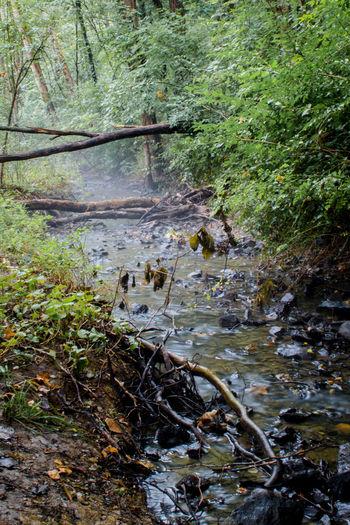 Foggy stream.
