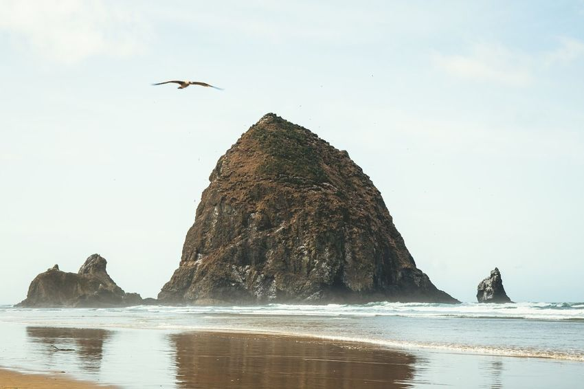 Seagull flying over Cannon Beach Reflection_collection Reflections In The Water Eyemphotography EyeEmBestPics Eye4photography  EyeEm Nature Lover EyeEm Best Shots Nature Photography Nature_collection Nature Landscape_photography Landscape_Collection Landscape Beachphotography Ocean View Ocean Sea Animals In The Wild Rock - Object Bird Nature Rock Formation Beach
