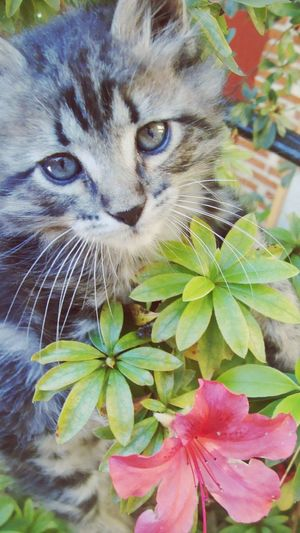 Cat Taking Photos Enjoying Life Flowers Green Flowers,Plants & Garden Nature_collection EyeEm Nature Lover Blue Eyes Animal Photography