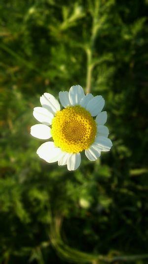 Flower Beauty In Nature Nature Fragility Naturaleza Flor Spring Ptimavera