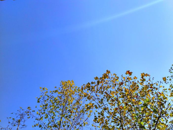 Nice Weather Sky Blue Autumn 2016 Hello World Autumn Colors Enjoying Life See What I See Beautiful Nature Take Photos Artphotography Taking Photos Eye4photography