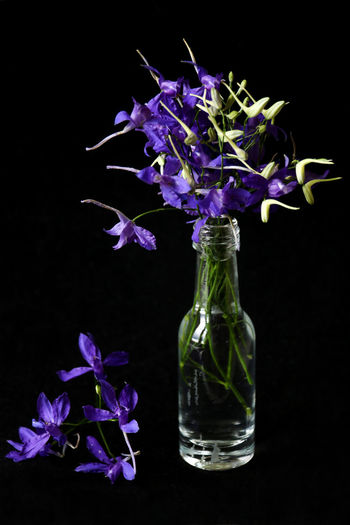 Consolida regalis Consolida Regalis Beauty In Nature Black Background Bouquet Close-up Flower Flower Head Fragility Freshness Indoors  Nature No People Petal Purple Studio Shot Vase Wildflowers Wildflowers Of Eyeem