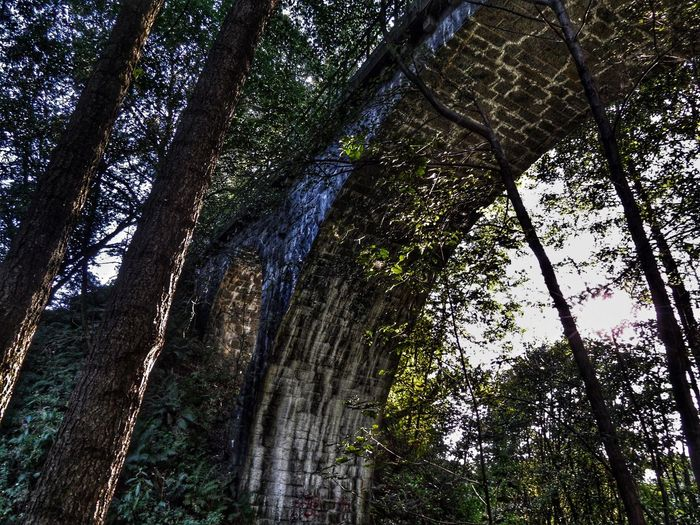 Altes Eisenbahn-Viadukt der Lokalbahn Falls-Gefrees. Railway Bridge Bridges Eisenbahnfotografie Eisenbahn Viaduct Lostplaces Fichtelgebirge Bestoftheday