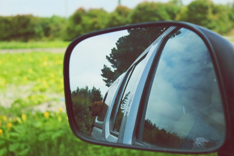 Car Reflection Nature Grass Vehicle Part Road Close-up Window Vehicle Mirror Mode Of Transport Travel Land Vehicle Side-view Mirror Road Trip Mirror Transportation Outdoors Day No People Tree First Eyeem Photo