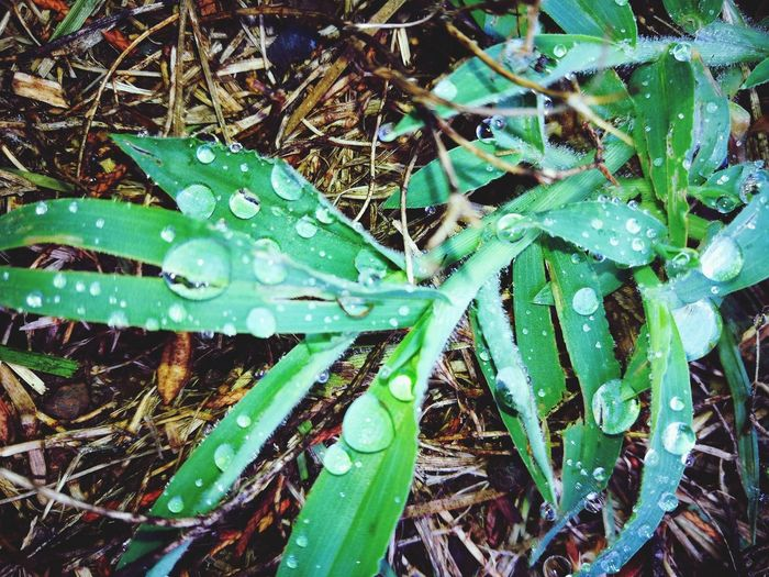 Rain Drops Rain Drops Rain Drops On Leaves Woods Rainy Days Leaf Backgrounds Full Frame High Angle View Close-up Plant Green Color Growing