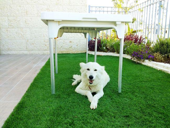 Home Enjoying Life Relaxing Dog Garden Home Sweet Home Home Homesweethome Homeless HomeAlone