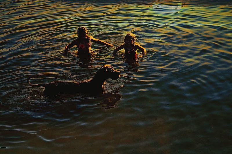 Dog With Kids Waterfun Outdoors Swimming Sunset Waterfun Lakeside Dog Love Dog Days Pets Familydog Great Dane Kinzigsee Germany🇩🇪