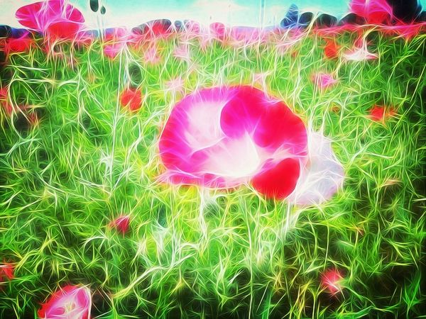 Re edit from outside Harrisburg, Oregon Tangled_Tuesday Hwy 99 Poppy Fields TangledFX