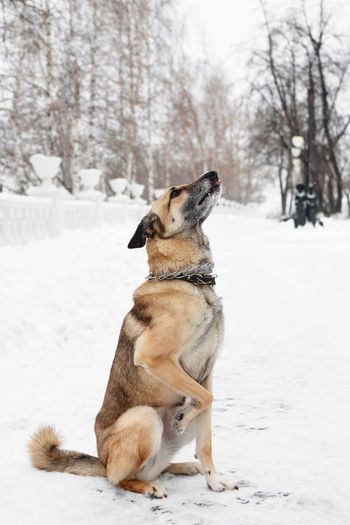 Dog looking away on snow covered land