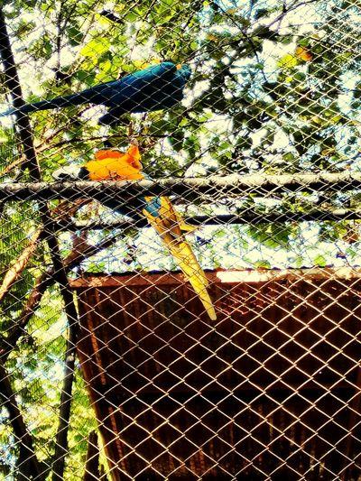 Zoo Animals  Meutrabalho ,