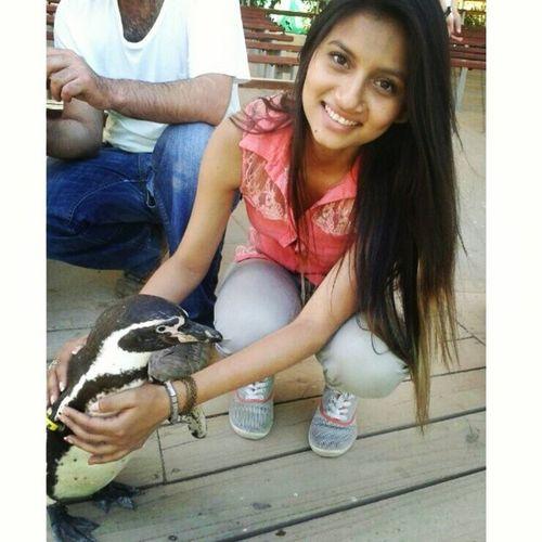 Instachile Pingüino <3