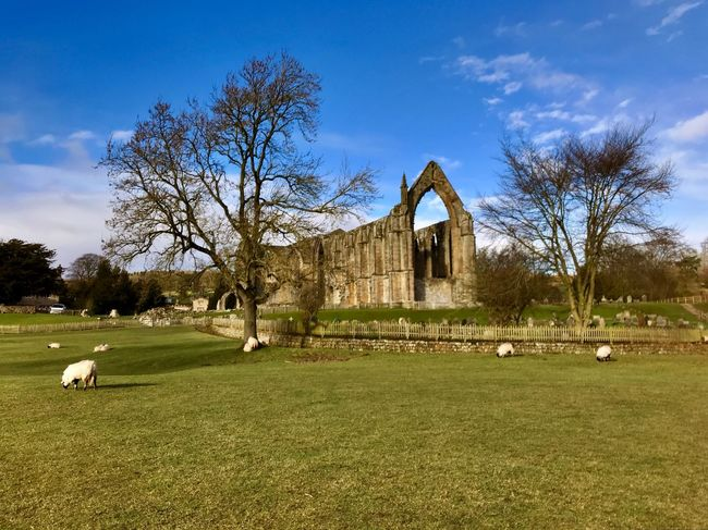 Bolton Abbey Priory. Grass Building Exterior Day History Sheep