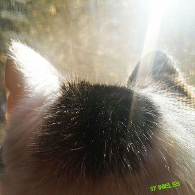 кошкины ушки ????? мимими люблюсвоюкошку яжвк Cat pickoftheday instacat