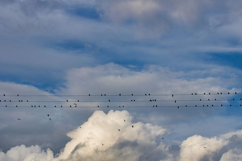 Low angle view of birds sittin on high voltage  line and flying in sky