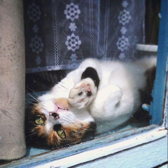 В гостях дома💤 первоечтовижу Wigandt_photo Wigandtphoto Anapa Анапа Homesweethome Cat Catoftheday Catstagram Cats_of_instagram Romanticcats кошканаокошке кошка окно старыйдом Oldhouse Mycat котыкошки выходной хорошаяпогода ПочтиЛето Kzoom