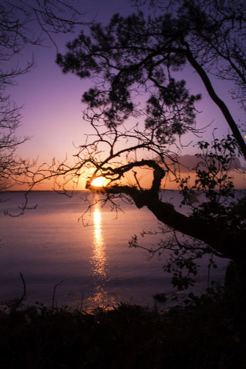 Beg-Meil Backlighting Photography Beauty In Nature Bird Branch Day Growth Lake Nature No People Outdoors Roche Percée Scenics Silhouette Sky Sunrise Sunset Tranquil Scene Tranquility Tree Water