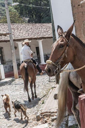 The Street Photographer - 2017 EyeEm Awards Horse Real People Jalisco Mexico San Sebastian Del Oeste