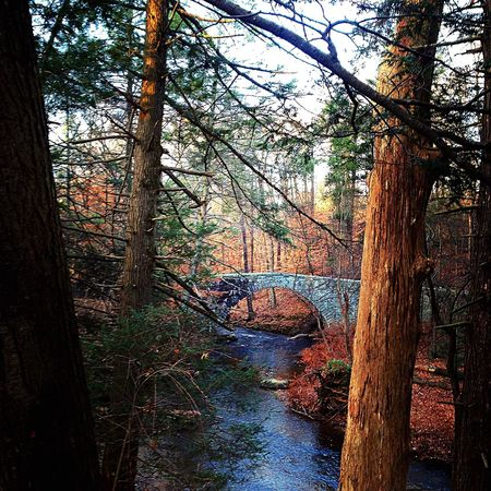 Back into the woods Trail Running Bridge Forest Trees Trail Tree Solitude Running Woods Trailrunning Nature