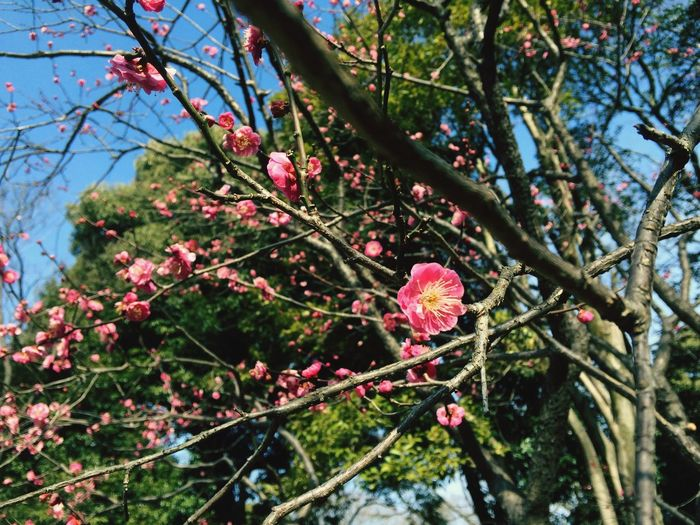Exquisite Japan Spring Signs Flowers