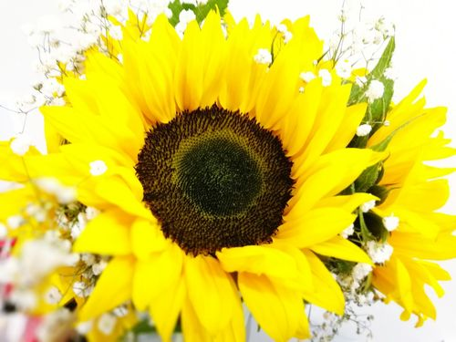 Freshness Petal Fragility Flower Yellow Flower Head Beauty In Nature Close-up Growth Sunflower Season  Nature Macro Blossom Selective Focus Plant In Bloom Springtime Vibrant Color Botany Sunflowers🌻 Sunflower