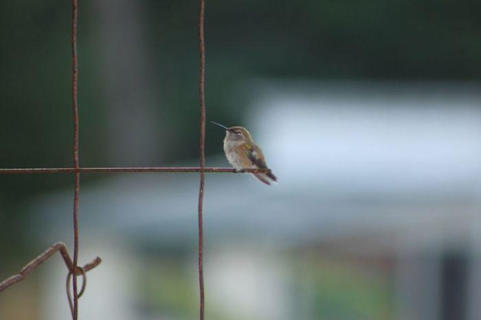 Hummingbird sitting pretty. Hummingbird I Love Nature! Moms House