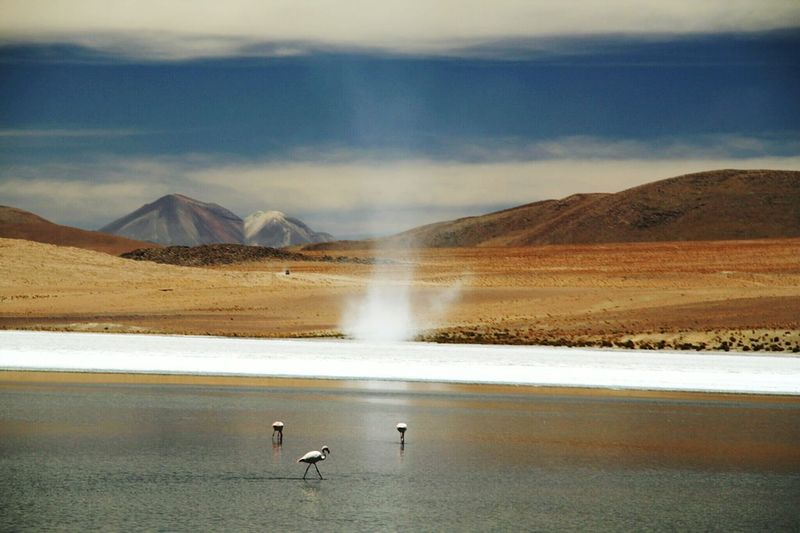 Waterspout Bolivia Mountains Dark Blue Sky Landscape_photography Pink Flamingos Lake View Flamingo Travel Destinations No People Animal Wildlife Landscape Tranquility Sky Tranquil Scene Outdoors Non-urban Scene Mountain Range Animal Themes Lake Animals In The Wild Beauty In Nature Bird Nature Water Mountain Rocky Mountains Volcanic Landscape