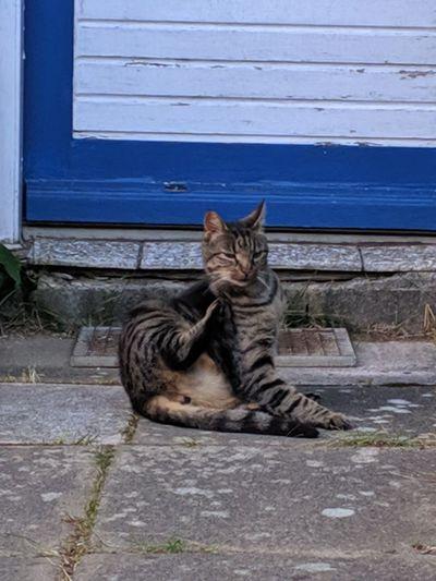 203/365 Katze
