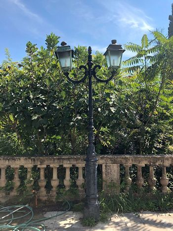 Lantern Plant Architecture Built Structure Tree Nature No People Day Building Exterior Sky Outdoors Sunlight Green Color Lighting Equipment