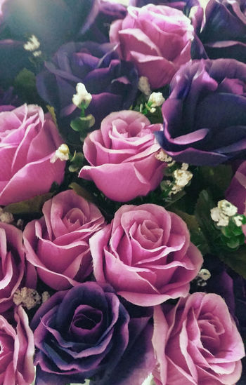 Beauty In Nature Blooming Blossom Botany Close-up Elégance Flora Flower Flower Head Fragility Freshness Growth In Bloom Nature Patterns Patterns In Nature Petal Petals Of Roses Pink Pink Color Pink Rose Purple Softness Spring Flowers Springtime