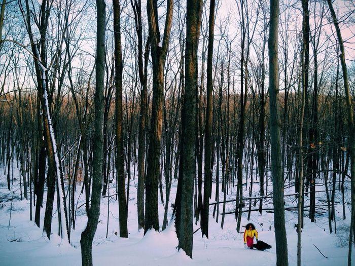 Sleigh Riding Forest Dusk