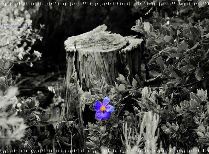 Walkontheforest Bonheur Nature Lanatureestmonyoga MalyaKayaPhotography Arles Arlescity
