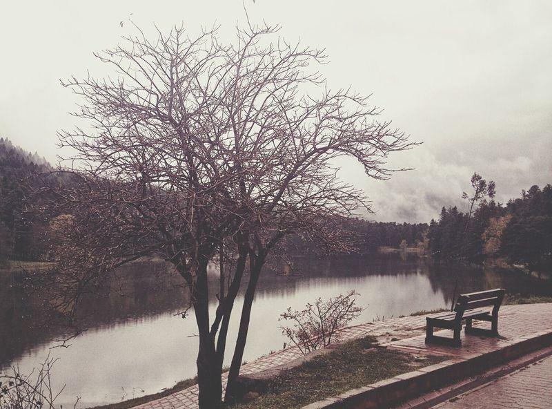 Bolu Golcuk Nature Lake Forest
