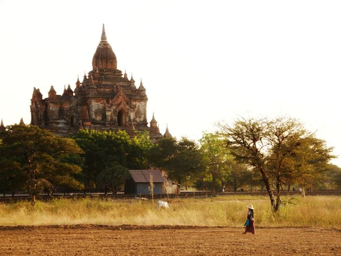 Bagan Temple Scene Travel Destinations Architecture Vacations Landscape People Outdoors Beauty In Nature
