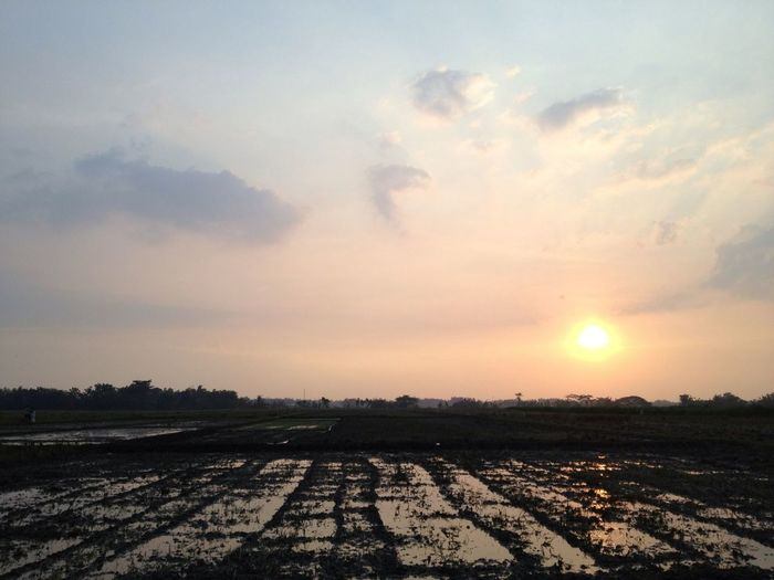 EyeEm Nature Lover This Is Indonesia Sunset At The Paddy Field