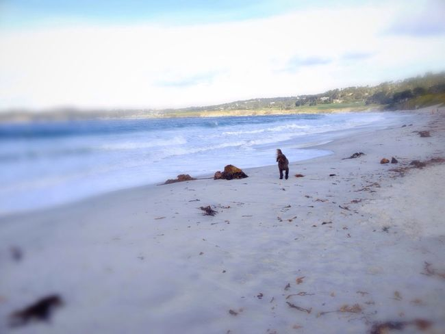 Beach Dog Sea Waves Tiltshift