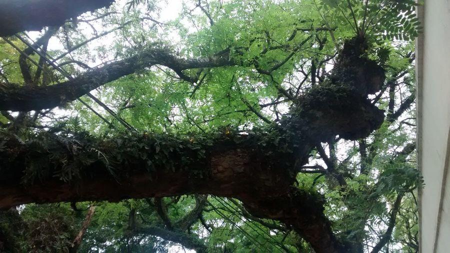 Preste atenção no que há a sua volta ❤ Nature Mais Amor Verde City Green