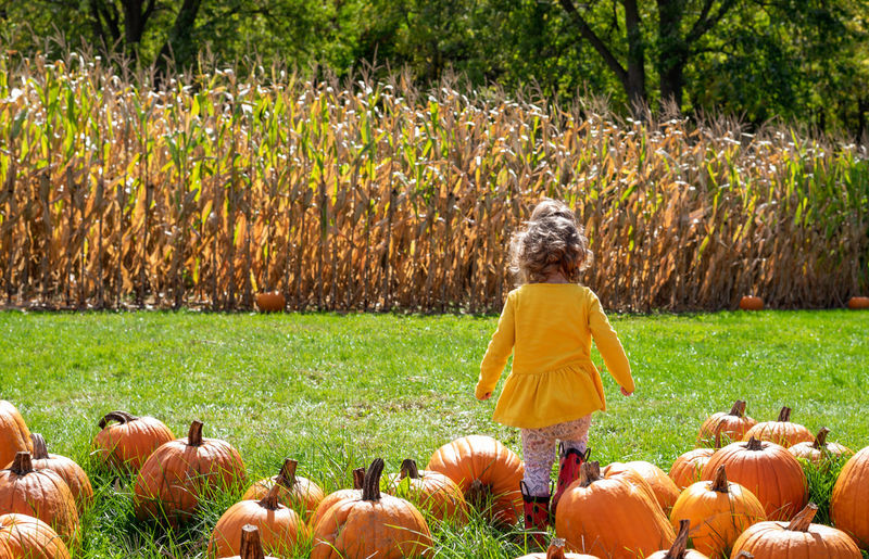 Rear view of girl standing by pumpkins on field