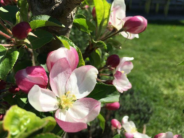 Spring Frühling