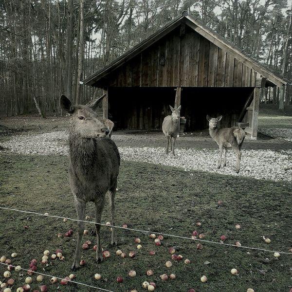 Nature Animal_collection Gotham Filter HölloheAm heiligen Abend geht es vor der Bescherung immer zum wildpark-hoellohe.de mit den Kindern. Tiere füttern und auf dem Spielplatz toben. frohes Fest