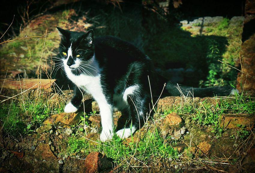 Cats Of Rome Cats Gatti Cat