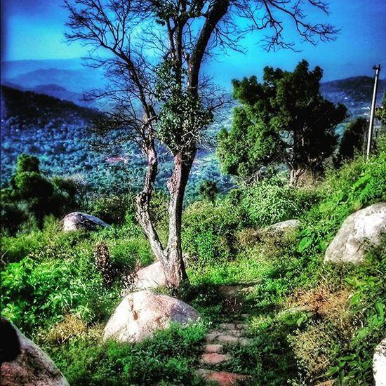 Yelagirihills Downthehill Greenaroundme Hills happymorning