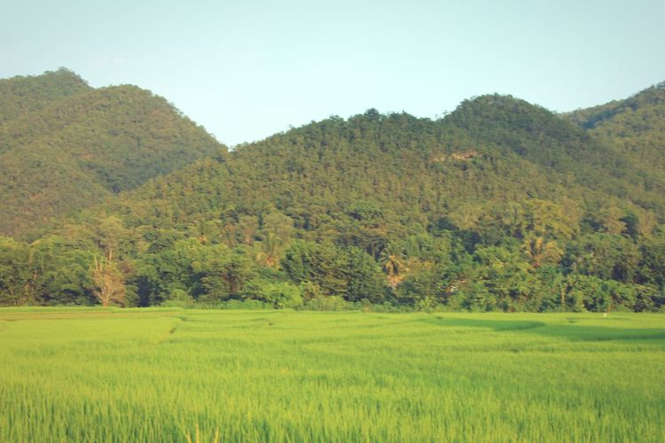 Rise Fields Mountains Jungle Palms Summer Fresh Landscape Countryside Outdoors Green No People in Pai Thailand North Thailand South East Asia