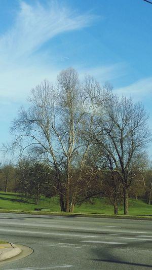 Tree Road Sky Tranquility